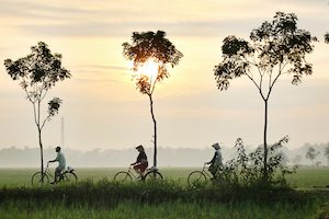 Three cyclists riding through a field in Asia