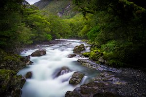 River through native bush